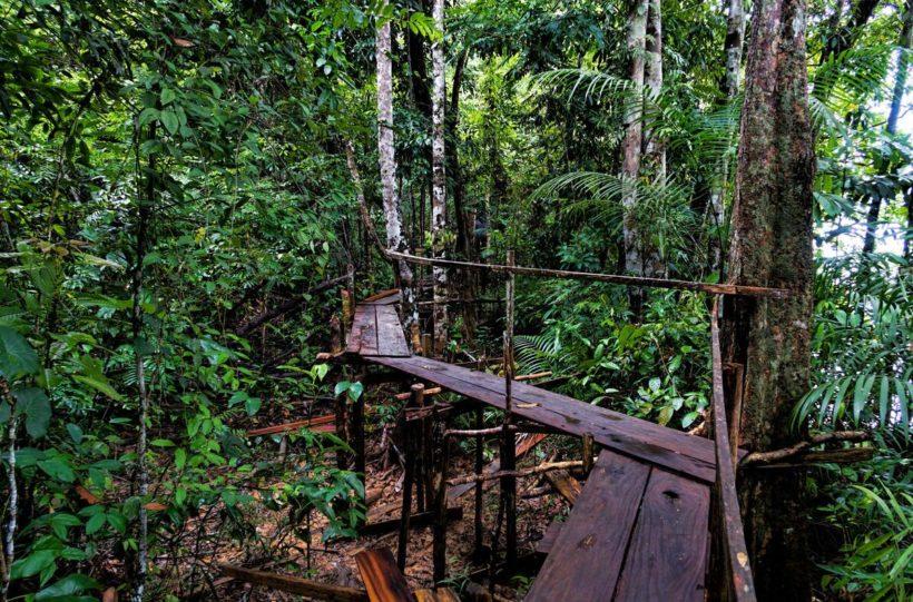 Sloth Island Nature Reserve, Guyana