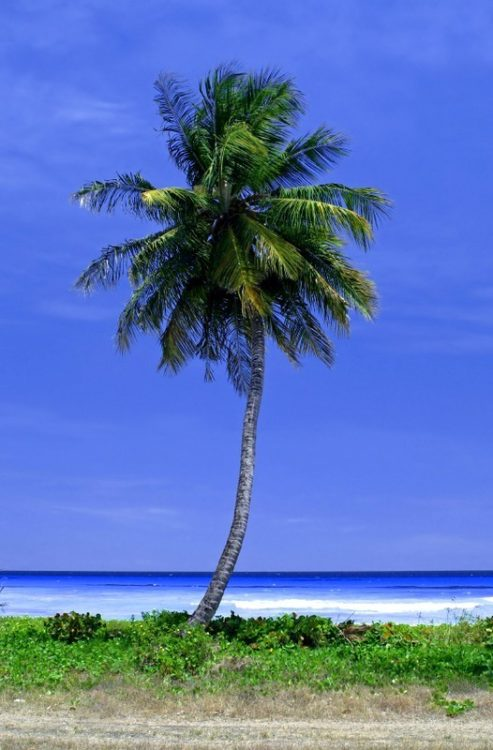 Fra Barbados