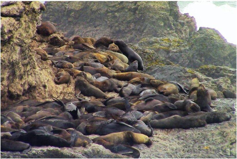 Sea lion rock La Lobería near Salinas Ecuador