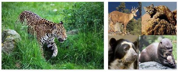 Bolivia Animals