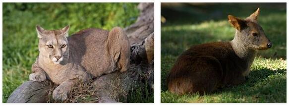 Chile Animals