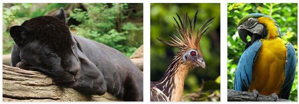 Guyana Animals