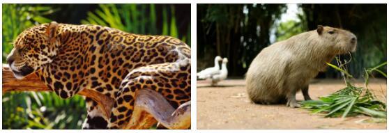 Paraguay Animals