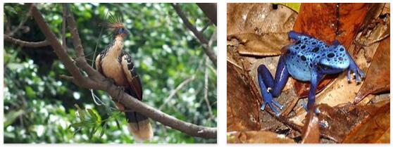 Suriname Animals