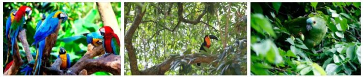 Brazil Flora and Fauna