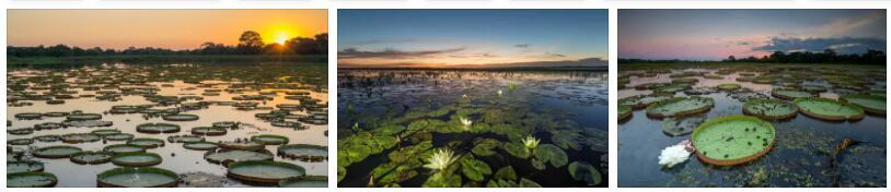 Pantanal wetland (World Heritage)