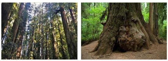Redwood National Park (World Heritage)